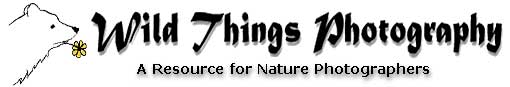 Wild Things Photo Logo